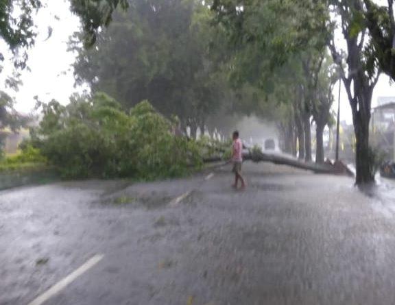 Hujan Mengguyur Kota Sumenep, Beberapa Pohon Tumbang