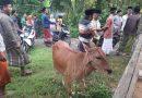 Polisi Buru Pelaku Pencuri Sapi di Sumenep